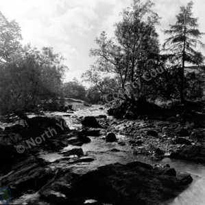 River Wharfe, Haugh Wood